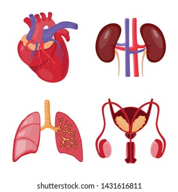 Isolated object of anatomy and organ icon. Collection of anatomy and medical vector icon for stock.