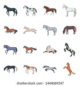 Isolated object of animal and stallion icon. Set of animal and farm stock symbol for web.