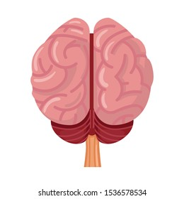 Isolated object of cerebrum and hemisphere icon. Graphic of cerebrum and gyrus stock vector illustration.