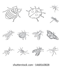 Isolated object of fauna and entomology symbol. Collection of fauna and animal stock vector illustration.