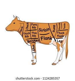 isolated object on white background. The cow for the restaurant is divided into parts, pieces of bull beef carcass, scheme. Vector illustration
