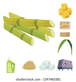 Isolated object  sugarcane and cane logo. Collection  sugarcane and field vector icon for stock.