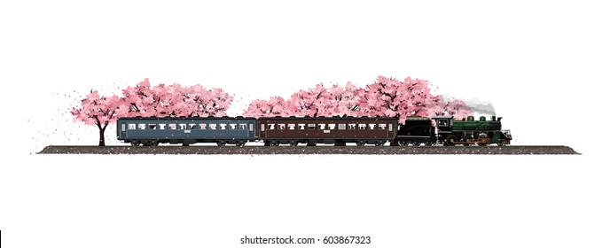 isolated on white background Cherry tree garden filled with flowers sakura breeze blow  fall and ancient train travel led by old steam locomotive running through unseen  in the spring of Japan.