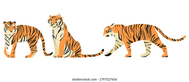 Isolated on white set of tigers in side view vector illustration. Big tropical cats design element collection. African felines in flat cartoon style.