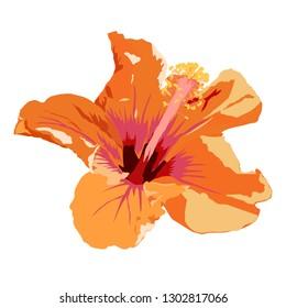 isolated orange hibiscus flower vector illustration on white background
