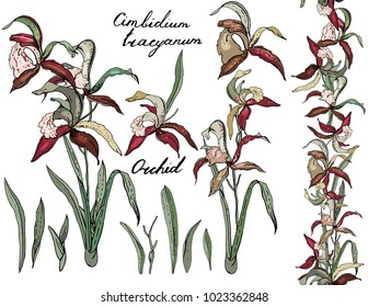 Isolated orchid cimbidium on white. Different color, elements for floral season design