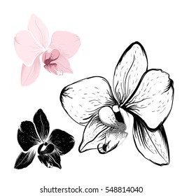 Isolated orchid flowers on white background. Realistic pink and black outline sketch. Phalaenopsis cambria floral vector design illustration elements collection set.