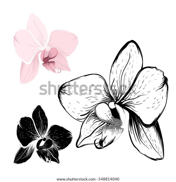 Image Vectorielle De Stock De Fleurs Dorchidée Isolées Sur