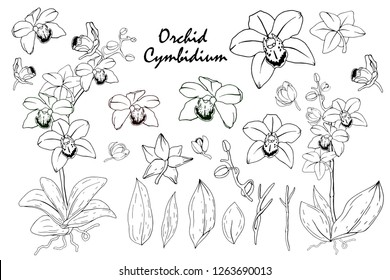 Isolated orchid on white outline. Different color, elements for floral season design