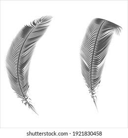 isolated pen feather bird design silhouette vector illustration