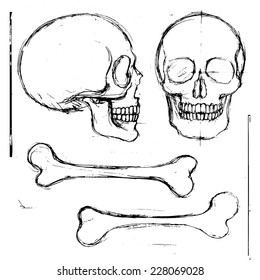 Isolated pencil hand drawn human skull and tibia bones, front and side view; vector objects
