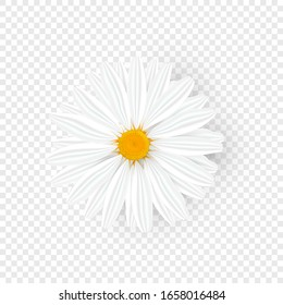 Isolated realistic chamomile. Yellow daisy flower. Cosmetic camomile head with shadow on transparent background. Vector Illustration