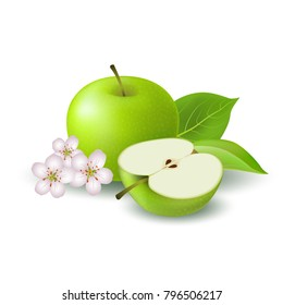 Isolated realistic colored green half apple and whole juicy fruit with white flower, green leaves and shadow on white background.