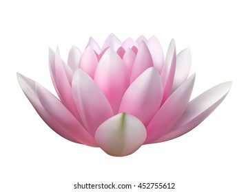 isolated realistic vector pink lotus flower on a white background