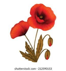 Isolated red poppy on white background