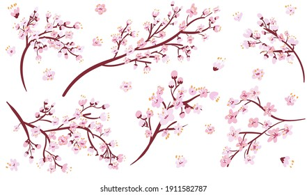 Isolated sakura branches collection . Cherry blossom set. Decorative Japan floral cartoon clipart.