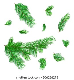 Isolated set of fir tree branches. Group of Chistmas tree elements for design and illustration. Pine tree details of New Year.