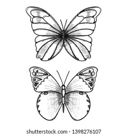 isolated, set of sketches of butterflies