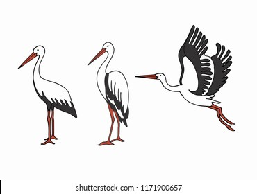 Isolated set of storks in different poses. Vector illustration of storks on white background, village and birds.