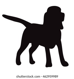 isolated silhouette of a dog