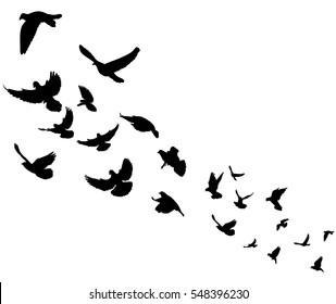 isolated silhouette flocks of flying pigeons,vector