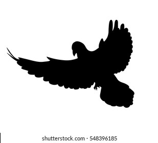 isolated silhouette of a flying dove