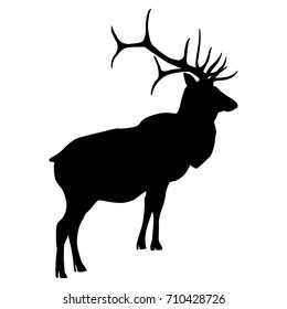 Isolated silhouette of wapiti or American elk.