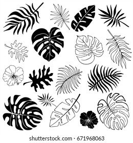 Isolated silhouettes of tropical palm leaves, jungle leaves. Vector set of hand drawn llustrations on white background.