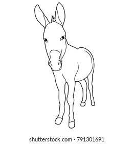isolated sketch of a donkey on a white background