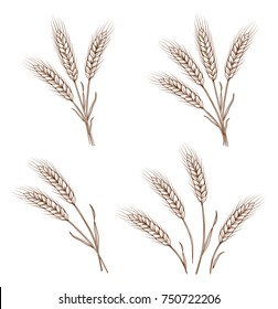 isolated sketch hand drawn wheat ears and sheaves on white background