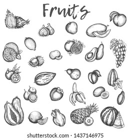 Isolated sketches of fruits. Apple and melon, avocado and kiwi Sketch of vinage vector icons of plum, peach and mango Hand drawn fruit