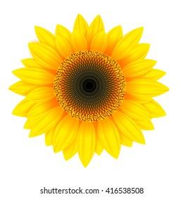 isolated Sunflower, vector illustration,sunflower seeds.
