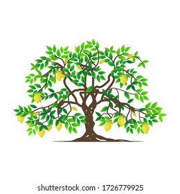 isolated tree and lemon plants on a white background, vector illustration