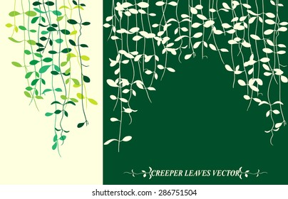 Isolated tropical creeper leaves vector for spring background