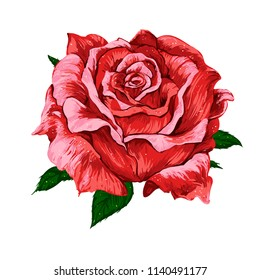 Isolated vector big bud of fresh red rose with leaves on white background.