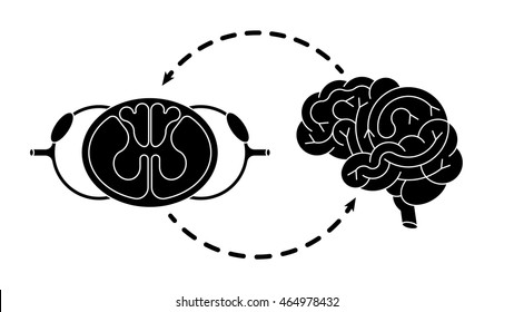 Isolated vector brain and spinal cord.
