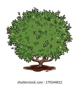 Isolated vector cartoon tea bush