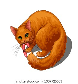 Isolated vector of cute fluffy unpleased red cat with stolen sausage in its mouth, painted in a realistic style.