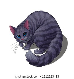 Isolated vector of cute fluffy unpleased grey stripped cat, painted in a realistic style.