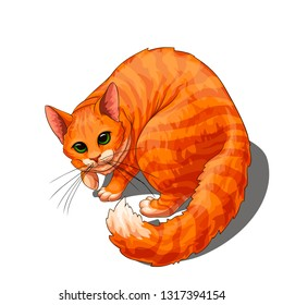 Isolated vector of cute fluffy unpleased red stripped cat, painted in a realistic style.