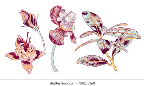 Isolated Vector Flower Elemnts