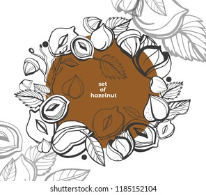 Isolated vector hazelnut on a white background. Colection. Vector collection of hand drawn nuts sketches. Vintage illustrations of hazelnut. Single seeds.  Organic nut. Detailed hand drawn hazelnuts.