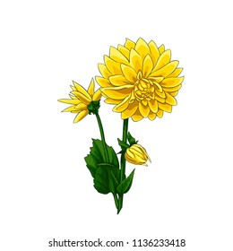 Isolated vector illustrated of beautiful yellow dahlias set in elegant bouquet.
