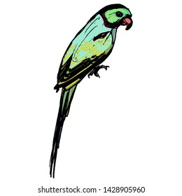 Isolated vector illustration. Alexandrine parakeet (Psittacula eupatria) or Alexandrine parrot. Hand drawn colored sketch.