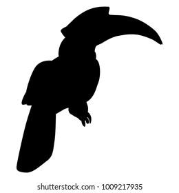 Isolated vector illustration. Black silhouette of exotic tropical kalao or rhinoceros hornbill bird.