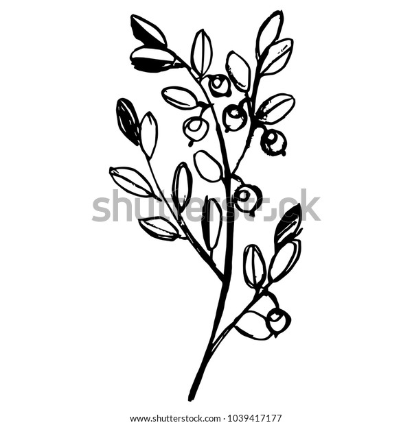 Isolated vector illustration of a blueberry plant. Vaccinium myrtillus. Hand drawn linear doodle sketch. Black silhouette on white background.