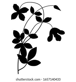 Isolated vector illustration. Branch of clematis flower. Black silhouette on white background.