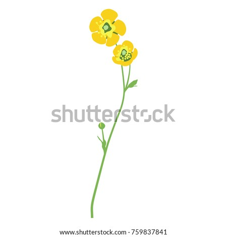 72bc0214093fb Isolated Vector Illustration Buttercup Flower Stock Vector (Royalty ...
