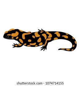 Isolated vector illustration of Fire Salamander. (Salamandra salamandra). Flat cartoon style.