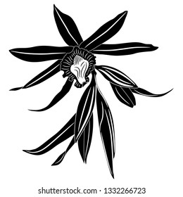 Isolated vector illustration. Orchid flower. Hand dawn sketch. Black and white linear silhouette.